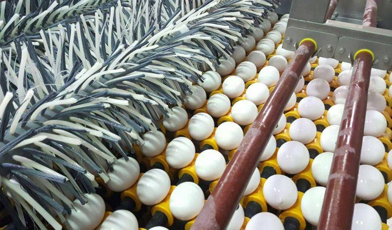 石安牧場自動清洗雞蛋洗選蛋過程